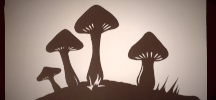 TLM-Mushrooms